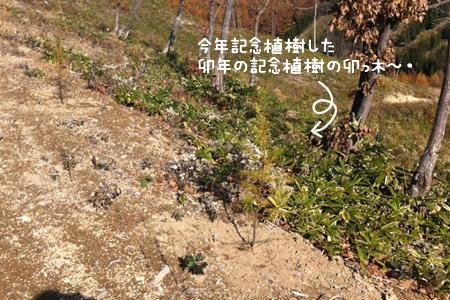 卯年記念植樹